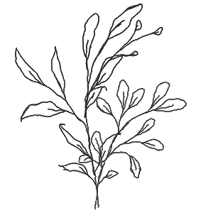 Blatt Vector